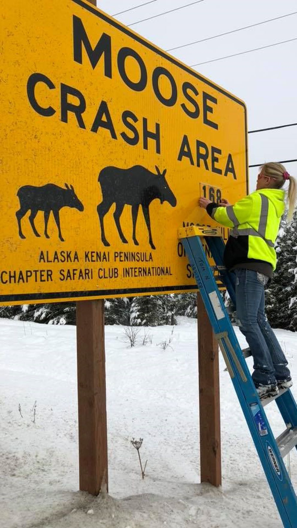 Laurie Speakman, 'The Moose Lady, ' spent the past eight years collecting roadkill moose for local Alaska charities. (Laurie Speakman/Pew Charitable Trusts/TNS)