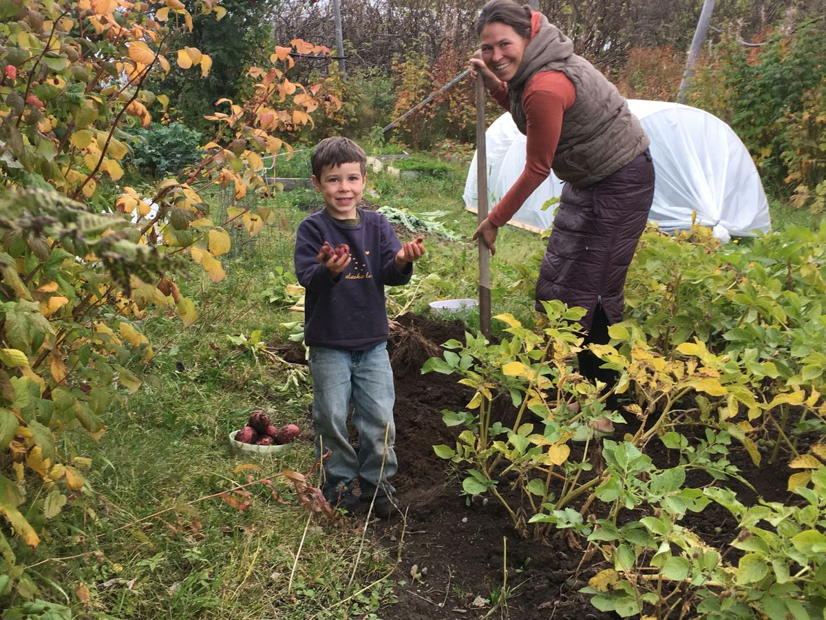 Saskia Esslinger of Homer and her son Rylan dig potatoes from the garden that helps feed them year-round. (Photo courtesy of Saskai Esslinger)