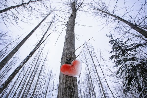 A heart made from ice hangs on a tree along the Cheney Lake trail in east Anchorage on Thursday, Feb. 4, 2021. (Emily Mesner / ADN)