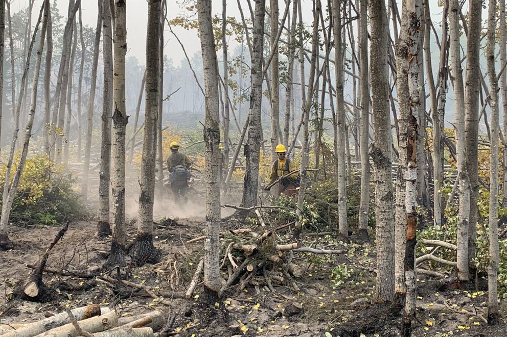 Firefighters cut down trees and address hotspots of the Swan Lake fire near Sterling on Friday, Aug. 30, 2019. (Jeff Parrott / ADN)