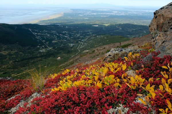 Colors of fall reach the alpine ridges of Chugach State Park east of Bear Valley on September 7, 2018. (Marc Lester / ADN)