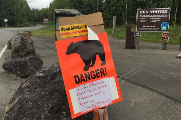 Multiple bear warning signs are posted around the Eagle River Campground Wednesday, June 14, 2017. Three hikers were injured by a bear on a trail near the campground. (Bob Hallinen / Alaska Dispatch News)