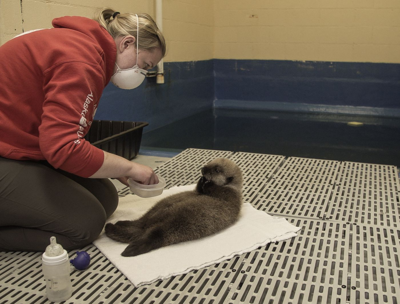Lupin (otter) USFWS MA73418B-1