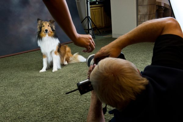 "David Jensen photographs a dog with help from an assistant who attracts attention. Anchorage photographer David Jensen hosted a fundraiser for Texas organizations that are working to assist animals in the aftermath of Hurricane Harvey on Sept. 12, 2017. Jensen made portraits of dozens of dogs throughout the day and suggested donations for animal rescue and recovery groups working in Houston. This was the second fundraising day at his studio for the cause. Jensen said he raised about $8,350 over both days. ""It's huge to me. I just love how everybody's sticking together. Everybody's coming together, trying to help out other people who they've never met,"" Jensen said. (Marc Lester / Alaska Dispatch News)"