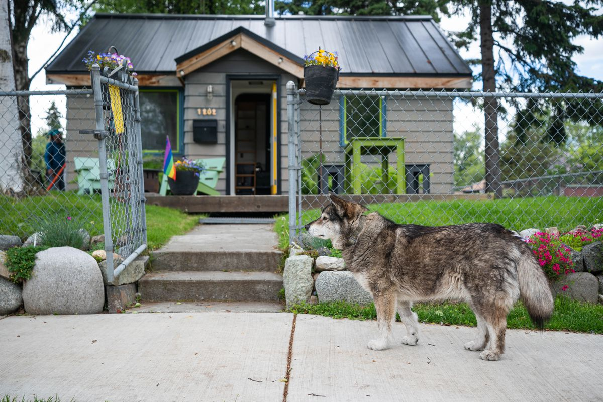 Tonio Nguyen's dog Newtok stands on the sidewalk outside his home Wednesday, June 17, 2020 in South Addition. (Loren Holmes / ADN)
