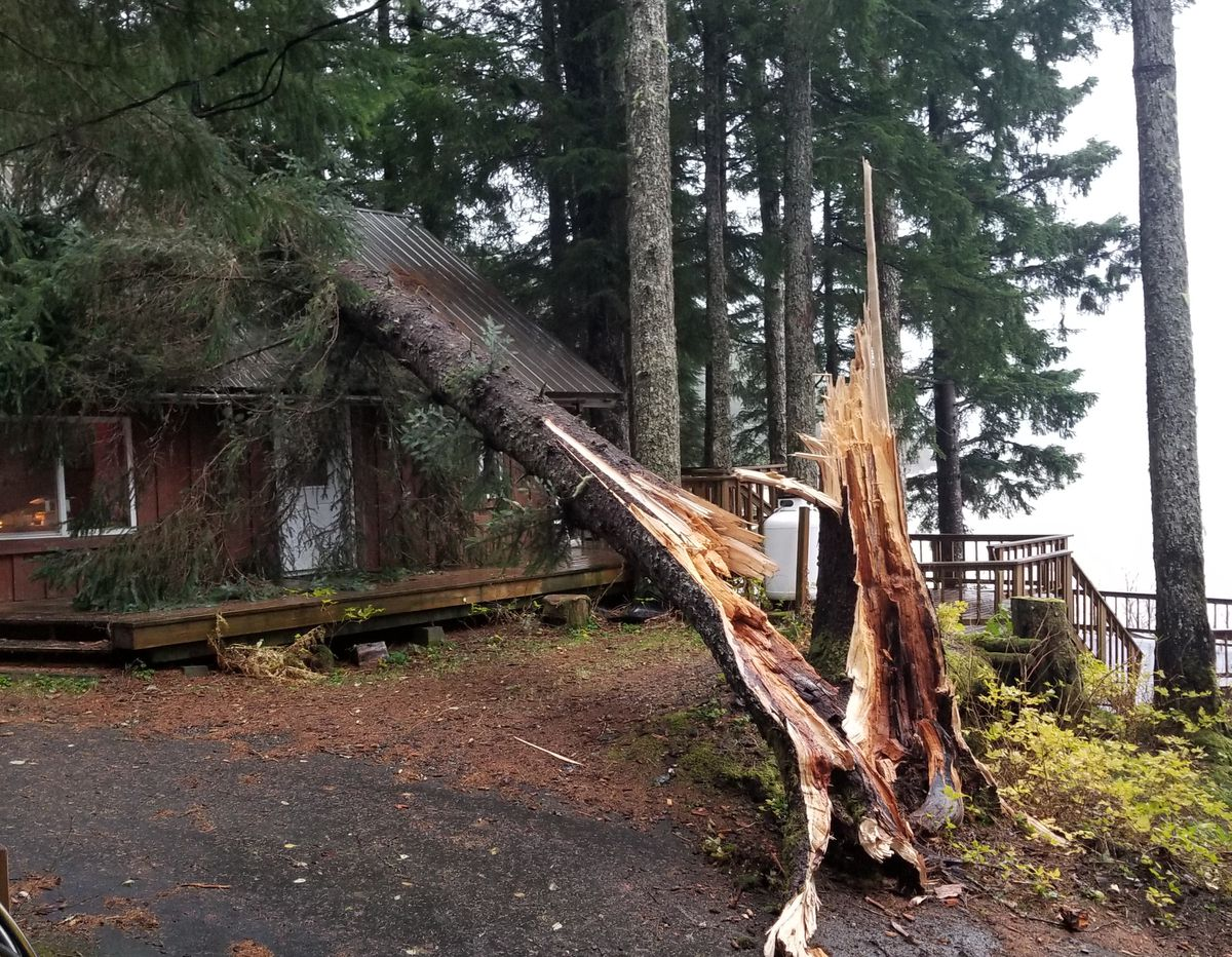High winds Tuesday in Cordova broke a tree on 5 Mile Loop Road. (Photo courtesy James Dundas)