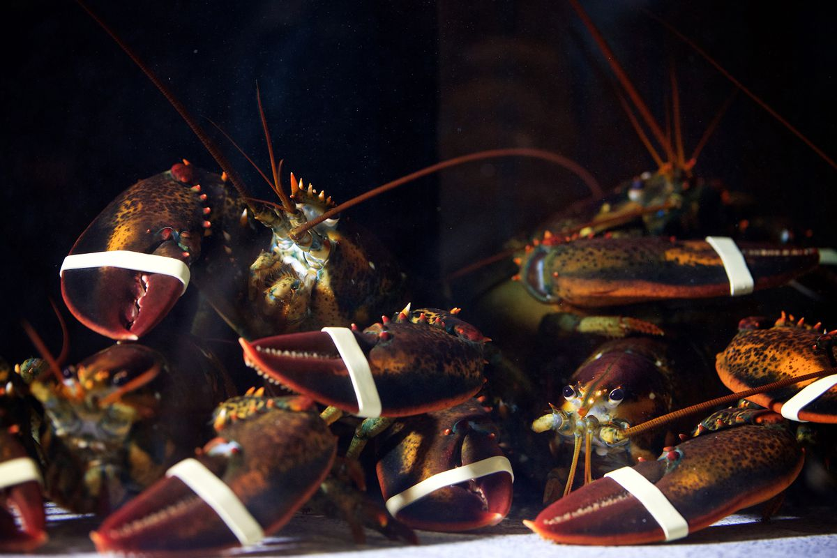 Lobsters await their fate in a seafood-restaurant tank. Photo for The Washington Post by Deb Lindsey