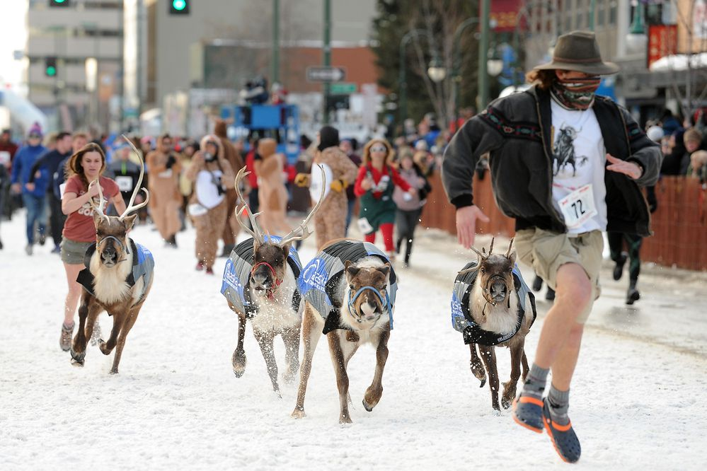Thousands of people participated in the Running of the Reindeer during the 2019 Fur Rondy on Fourth Avenue in Anchorage, AK on Saturday, March 2, 2019. (Photo by Bob Hallinen)