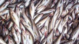 New DNA research changes Alaska pollock classification