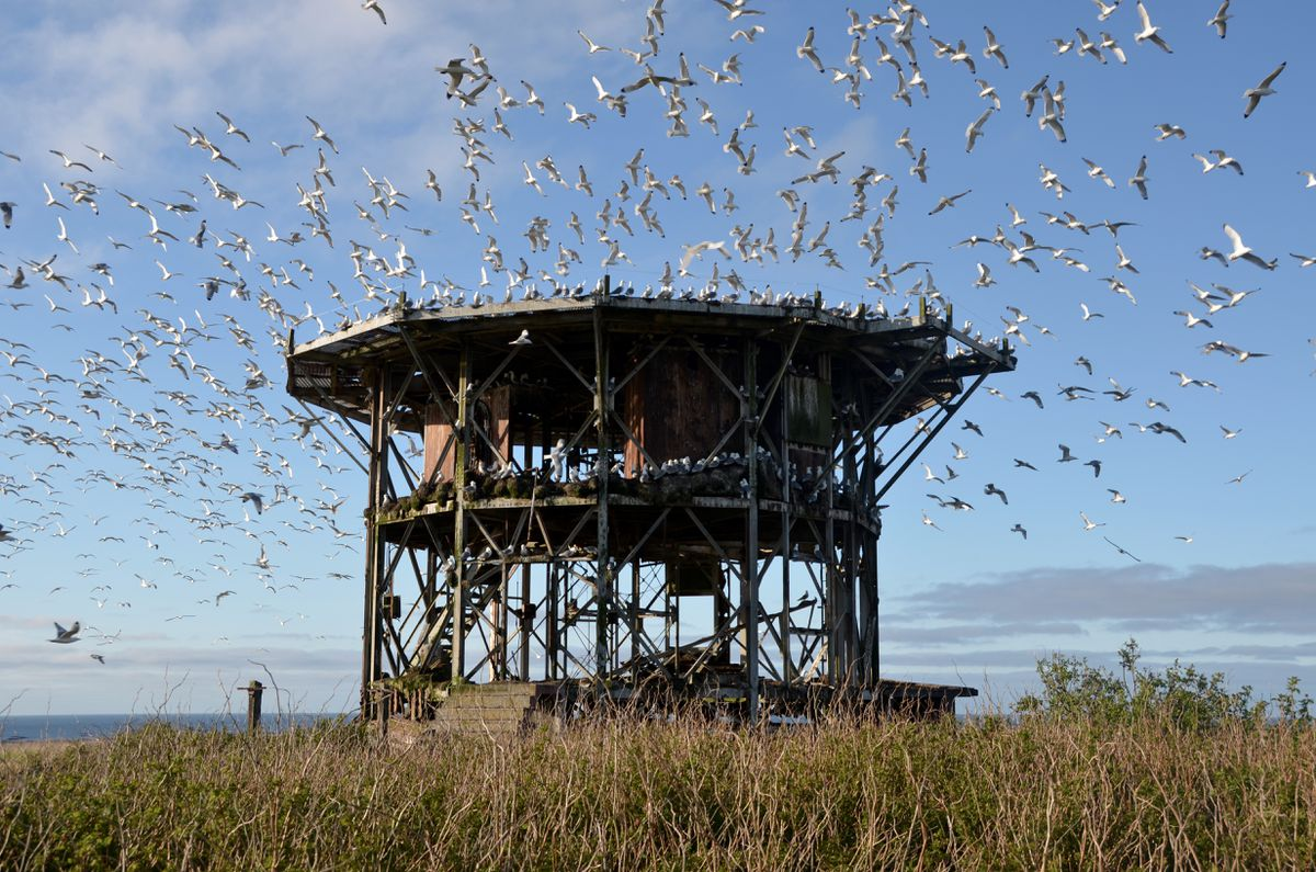 Abandoned radar facility used by nesting kittiwakes, Middleton Island, May 2015. (Rick Sinnott)