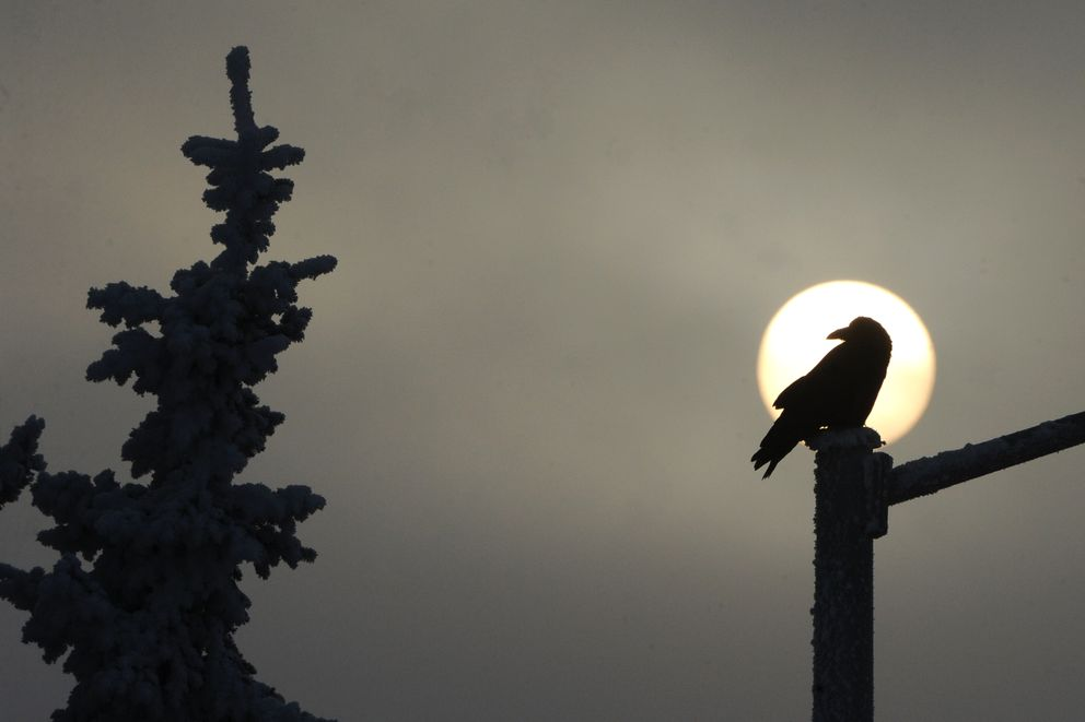 A raven perched on a street light is silhouetted by the sun during a foggy Sunday afternoon, Jan. 6, 2019. (Bill Roth / ADN)