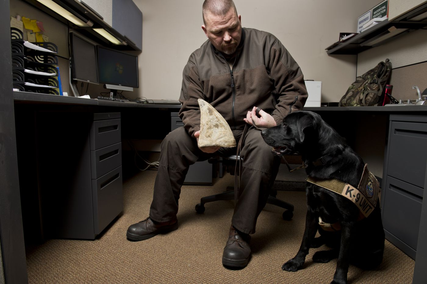 Wildlife inspector Chad Hornbaker is also the handler for Doc, a black Lab trained to detect 10 odors. Hornbaker holds a rhino horn used for training purposes. (Marc Lester/ ADN)