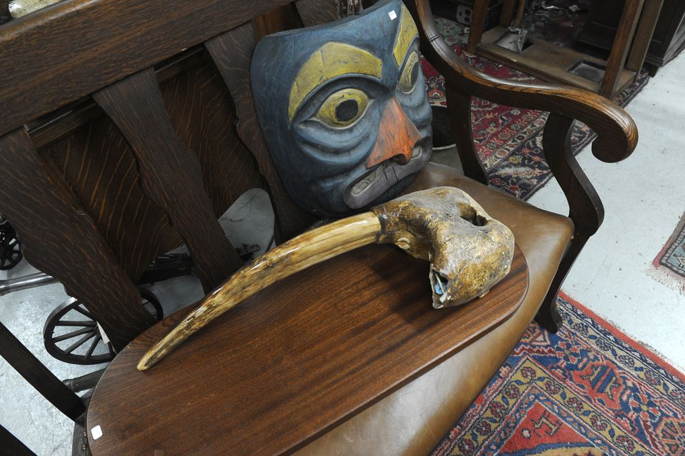 One of the tusks from a $7,000 fossilized ivory mount was missing after a break in at Duane's Antique Market in Anchorage, AK on Saturday, April 7, 2018. (Bob Hallinen / ADN)
