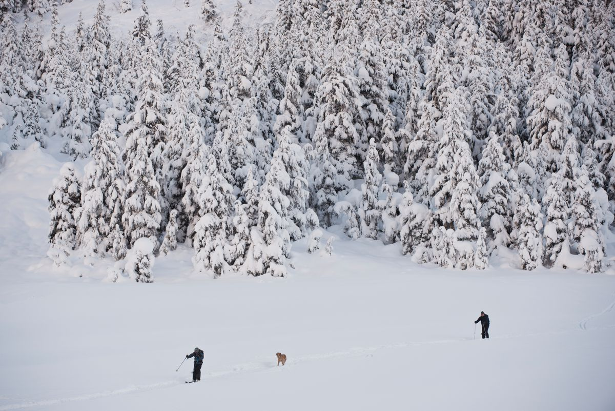 Skiers and a dog in Turnagain Pass in December 2016. (Marc Lester / ADN archive)