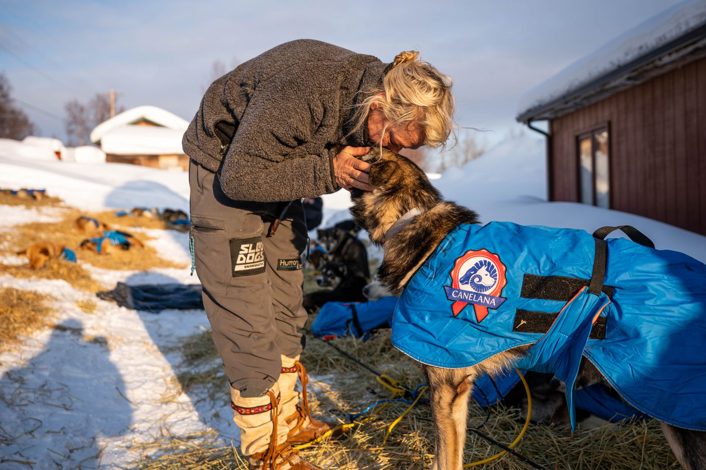 Mille Porsild kisses one of her dogs in Takotna on Wednesday, March 11, 2020 during the Iditarod Trail Sled Dog Race. (Loren Holmes / ADN)