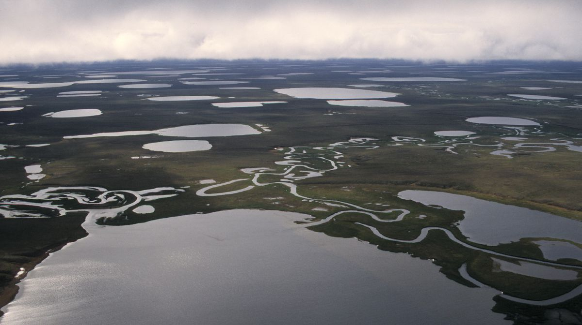 Lakes dominate the landscape in a northern part of the National Petroleum Reserve-Alaska. (Anne Raup / Alaska Dispatch News)