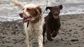 When introducing a new dog into the pack, presume nothing — and hope puppy love is universal