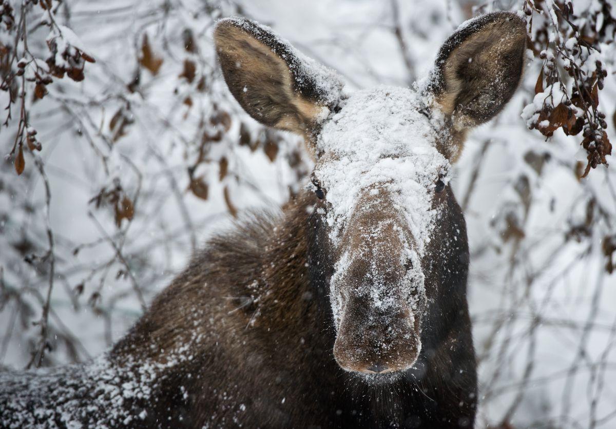 Here comes winter. (Marc Lester / Alaska Dispatch News)