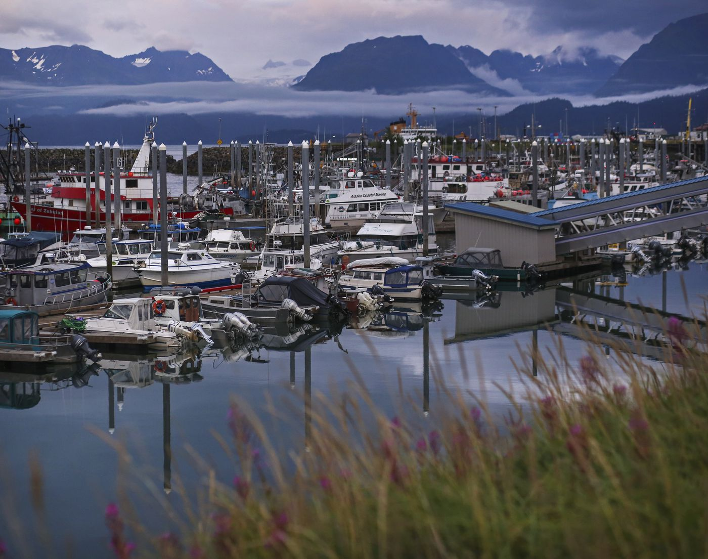 The Homer Boat Harbor photographed on Aug. 8, 2020. (Emily Mesner / ADN)