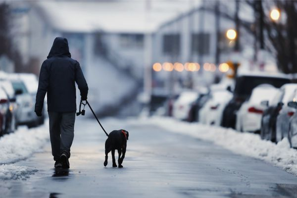 A man takes a dog on an early morning walk in the East Boston neighborhood of Boston, Tuesday, Feb. 2, 2021. (AP Photo/Michael Dwyer)