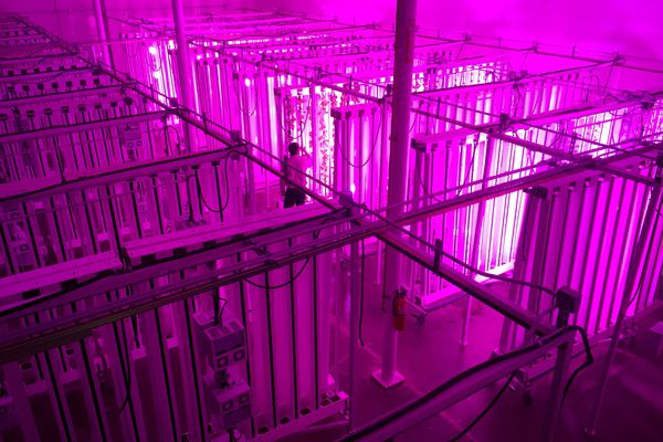 Hundreds of vertical hydroponic grow towers at Alaska Seeds of Change. (Erik Hill / Alaska Dispatch News/File)