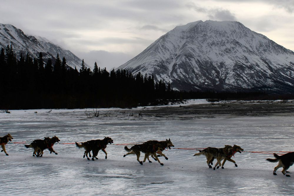 Rookie Niklas Wikstrand departs from Rohn over the bare-ice South Fork Kuskokwim River. Mushers and teams running near the back of the Iditarod race field rested at the Rohn checkpoint on March 5, 2019. (Marc Lester / ADN)