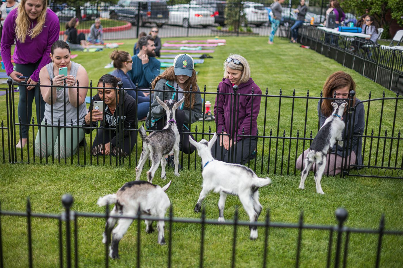 People pet goat kids before a goat yoga session Thursday. (Loren Holmes / ADN)
