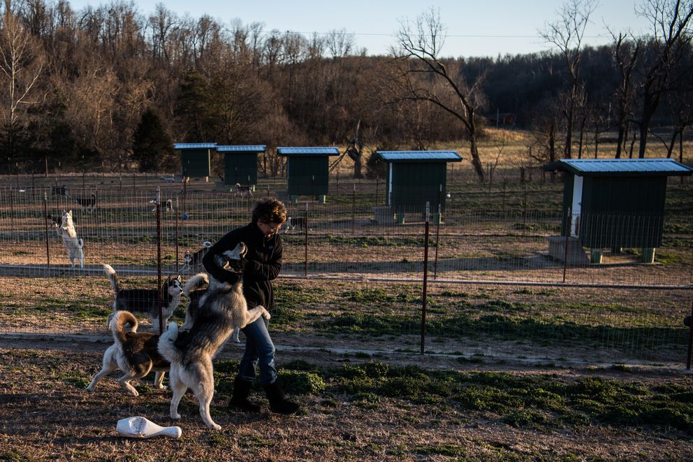 Abigail Anderson, 53, the owner of Sugarfork Kennels is seen with huskies. (Washington Post photo by Salwan Georges)