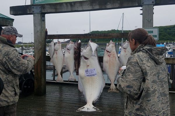People take photos of the 285.8 pound halibut that was caught by Patricia Johnson of Clovis, California, aboard the Harvester on Thursday, July 26. Catching this fish put her in first place in the overall standings in the Valdez Halibut Derby. The derby runs through September 2. (Photo from KVAK Radio)