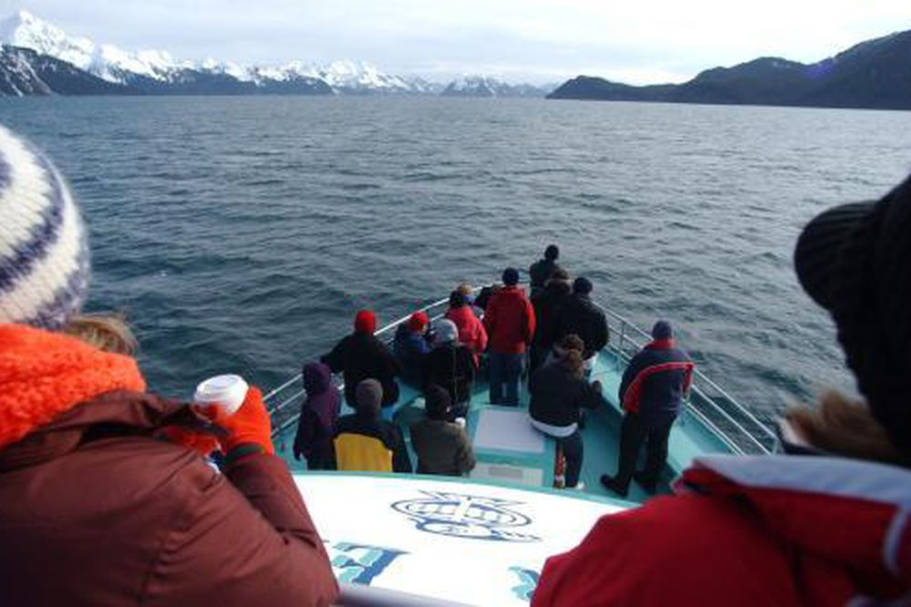 Marc Lester/Anchorage Daily News Whale watchers aboard a Kenai Fjords Tours boat keep an eye out for a humpback whale that had been surfacing in their vicinity in Resurrection Bay recently. 050331
