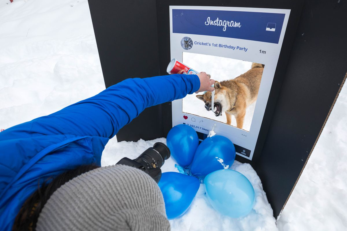 Gabrielle Poon takes a picture of her dog Cricket during Cricket's first birthday party Saturday at Kincaid Park. Cricket might be Alaska's most famous dog on Instagram, with over 47,000 followers for his account @cricketinthethicket. (Loren Holmes / ADN)