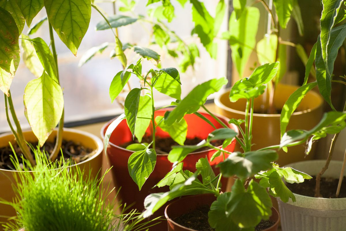 In Alaska, it's time for houseplants. It's time to take care of them. (Getty Images)