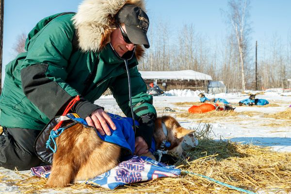 Chief veterinarian Stu Nelson examines a dog at the Tanana checkpoint during the 2017 Iditarod on March 8, 2017. (Jeff Schultz/SchultzPhoto.com)
