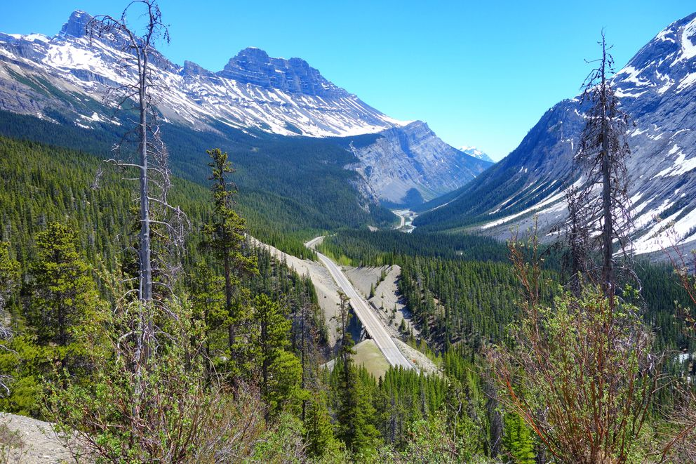 Looking back on the Icefields Parkway from Bow Summit north of Banff. (Scott McMurren)