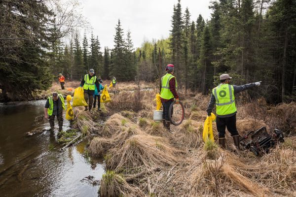 A group of volunteers affiliated with Quantum Spatial picks up trash along Chester Creek on Saturday, May 11, 2019 during the annual citywide creek cleanup event. The effort was organized in 1984 by then-mayor Tony Knowles, according to the Anchorage Waterways Council. (Loren Holmes / ADN)