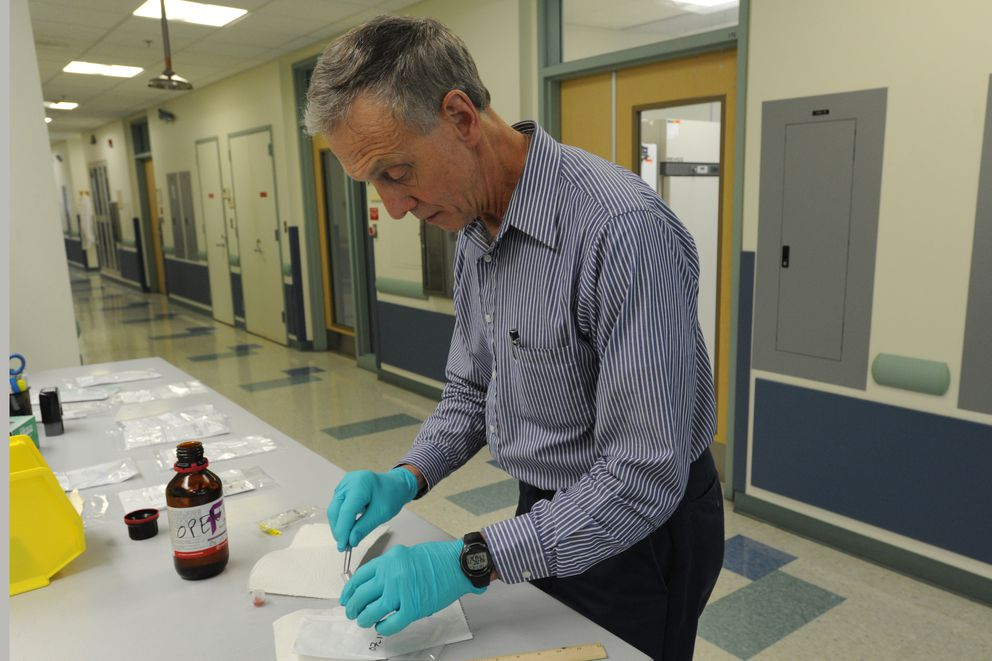 State veterinarian Bob Gerlach looks at one of the ticks found in Alaska and sent into his office. (Bill Roth / ADN)