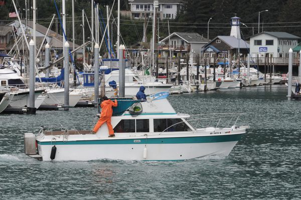 A fishing boat returns to the Seward Boat Harbor on Monday, August 4, 2014. The Seward Silver Salmon Derby, one of the oldest and largest fishing derbies in the state, begins Saturday, August 9, 2014 and ends Sunday, August 17, 2014.