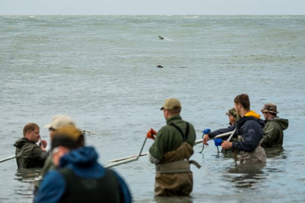 OPINION: Fighting over fish in the Upper Cook Inlet is nothing new. Both sport and commercial groups have has aggressively sought to a share of the catch for years. But the current attack on personal use and sport fishing by commercial users goes far beyond anything in the past.