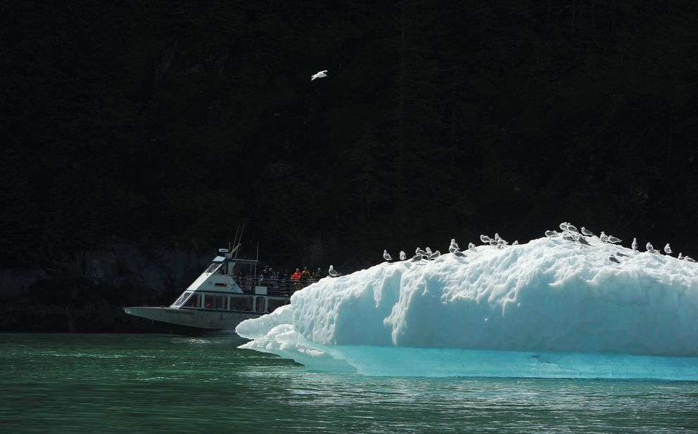 Allen Marine's Katlian Express day boat cruises past an iceberg with a flock of gulls perched on it in Tracy Arm. (Bob Hallinen / ADN)