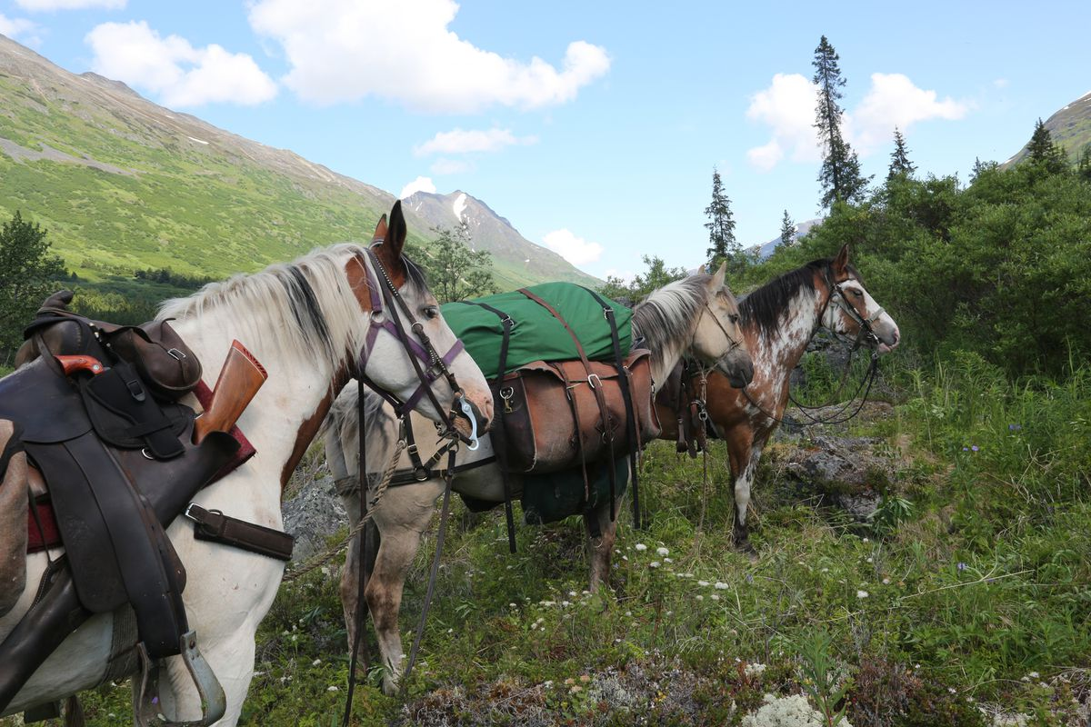 There is just something about horses in the high country. Kenai Mountains, July 2018. (Photo by Steve Meyer)