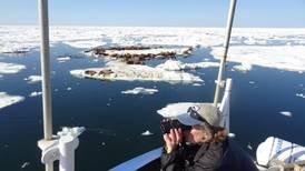 Seals seem to be adapting to shrinking sea ice off Alaska