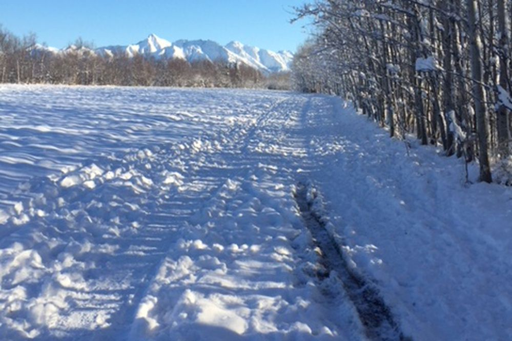 Skiing, hiking, or biking are activities to enjoy this winter at the Matanuska Experiment Farm and Extension Center. (Photo by by Jodie Anderson)