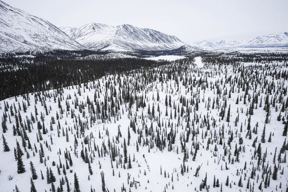 Jeff Deeter mushes between Puntilla Lake and Finger Lake on Sunday, March 14, during the Iditarod. (Loren Holmes/ADN)