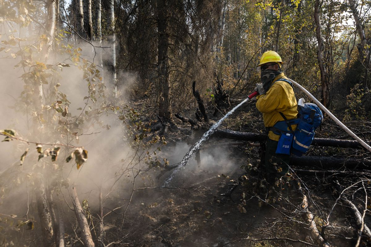 John Williams, from Venetie, puts out hot spots on the McKinley fire Friday, Aug 23, 2019. (Loren Holmes / ADN)