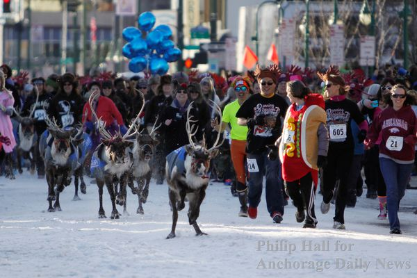 Reindeer run their way through competitors at the Fur Rondy Running of the Reindeer in downtown Anchorage, Alaska Saturday, March 1, 2014. Hundreds of people ran in four heats sprinting down 4th Avenue ahead of a herd of reindeer. (Photo by Philip Hall)