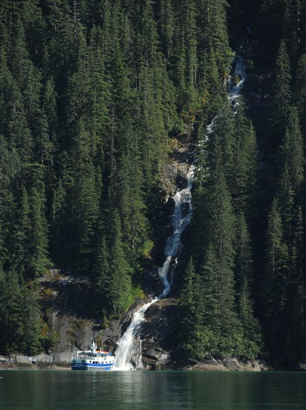 The small cruise ship Sikumi stops at a waterfall in Tracy Arm on its way to South Sawyer Glacier. (Bob Hallinen / ADN)