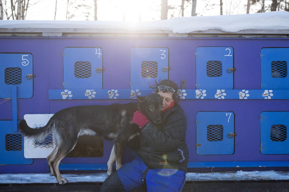 Musher Karin Hendrickson hugs her dog Boom during the Iditarod vet checks in Wasilla on Wednesday. (Loren Holmes / Alaska Dispatch News)