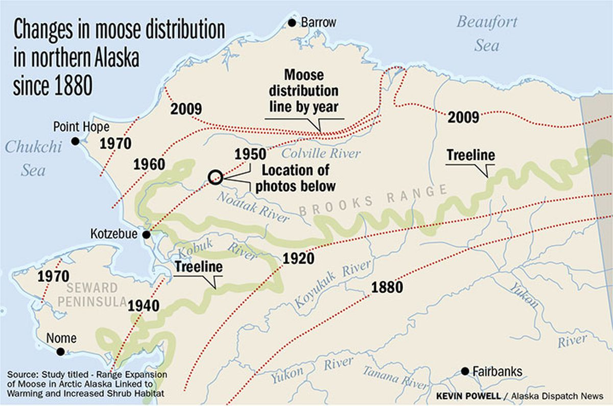 as shrubs expanded into a warming arctic moose followed alaska