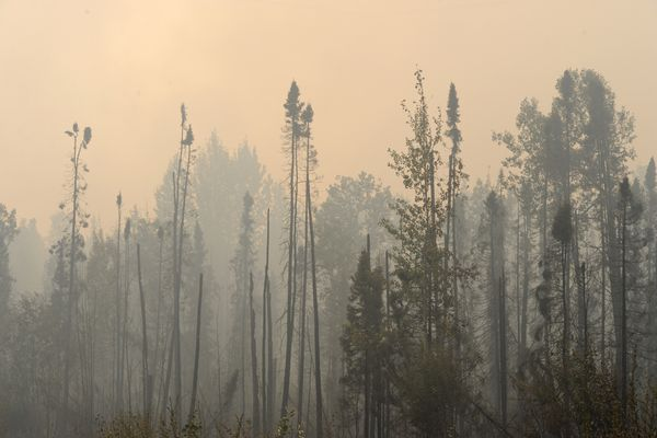 Smoke rises above burnt spruce trees from the McKinley fire along the Parks Highway on Monday, Aug. 19, 2019. (Bill Roth / ADN)