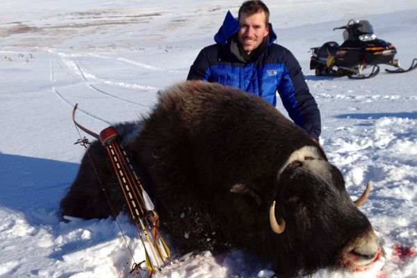 Brian Richards of Soldotna felled a cow musk ox on Nelson Island with a combination of new bow technology and ancient stone arrowheads inherited from his grandfather, Winn Richards. (Courtesy Brian Richards)